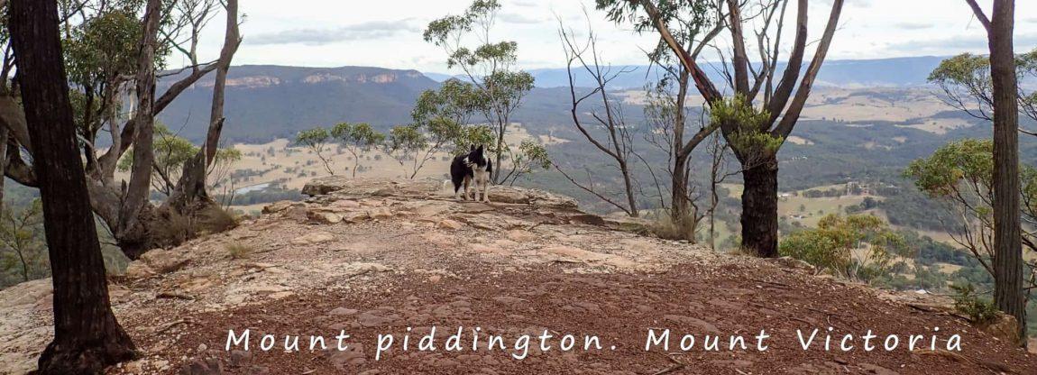 mount piddington