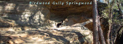 title birdwood gully