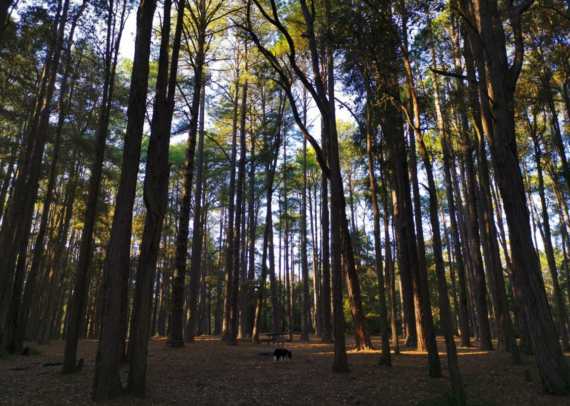 olney state forest
