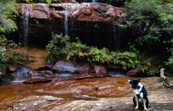 frederica falls