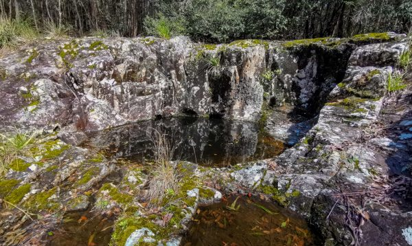 kerewong state forest
