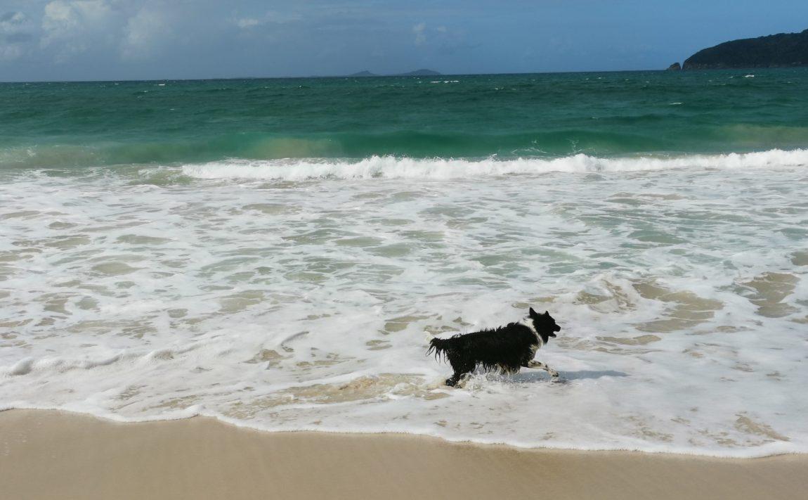 jimmys beach