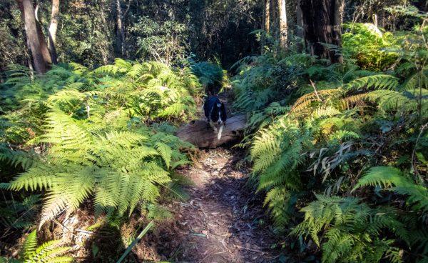 birdwood gully